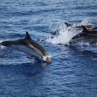 Daulphins between Panarea and Stromboli area